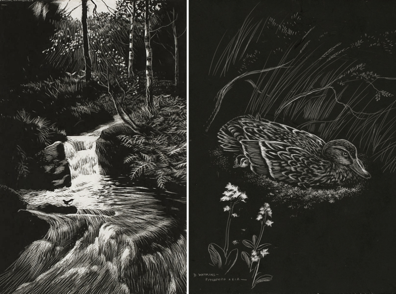 Two illustrations by Denys Watkins-Pitchford