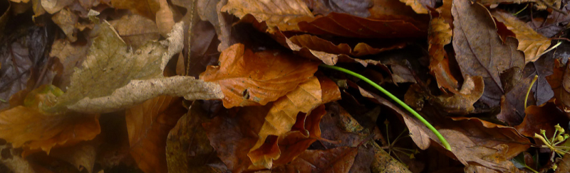 in the rustle of leaves,