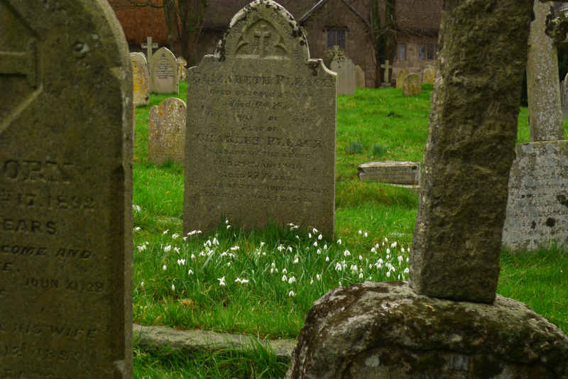 Snowdrops and gravestones