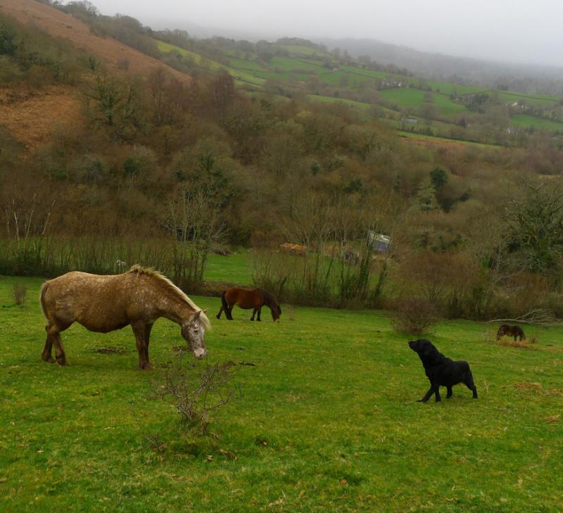 Ponies 12