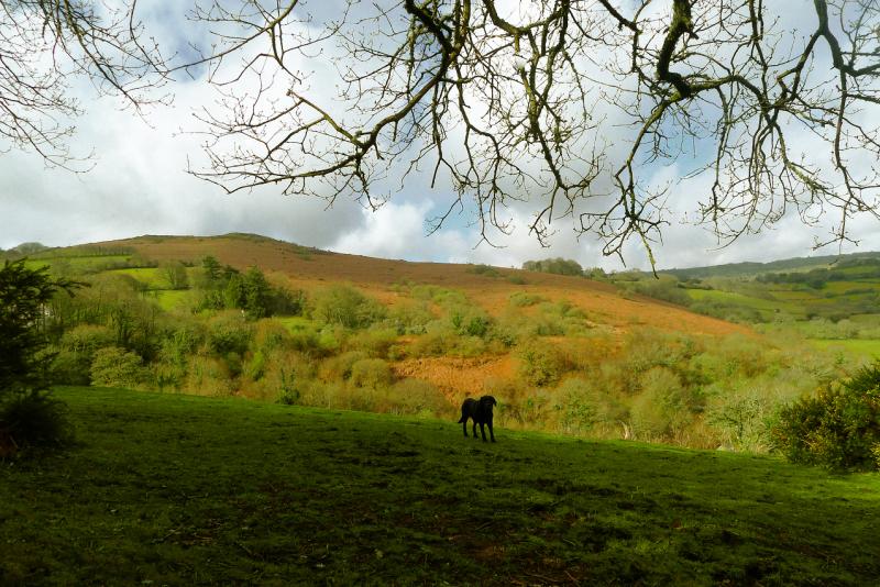 Meldon Hill