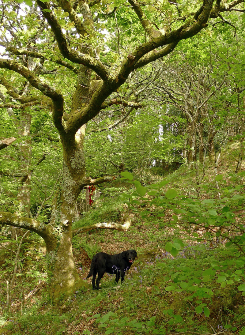 Tilly below the cloutie tree