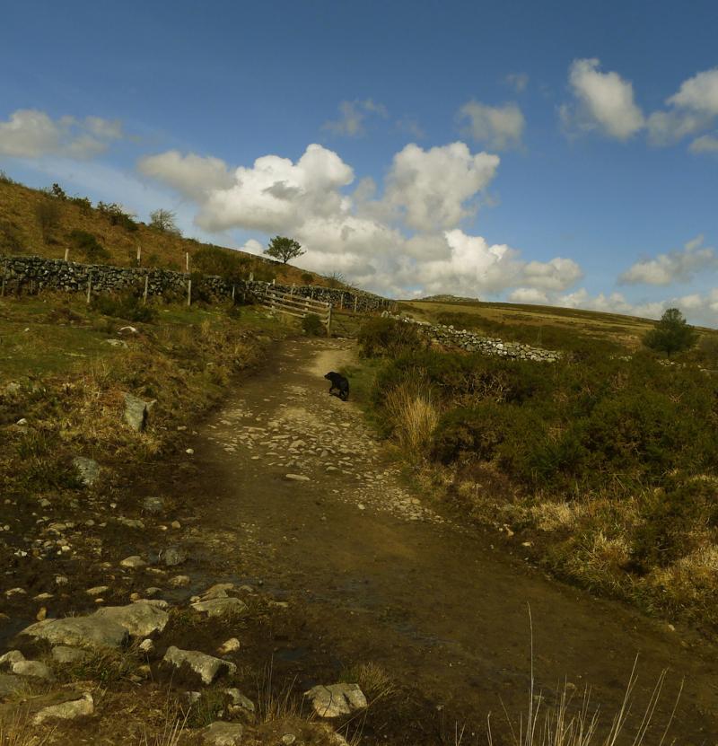 Dartmoor journey