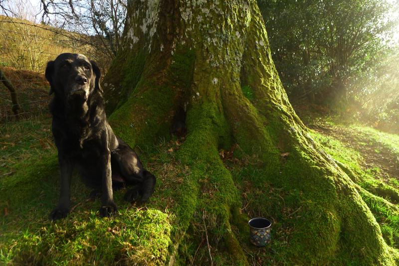 Hound and oak