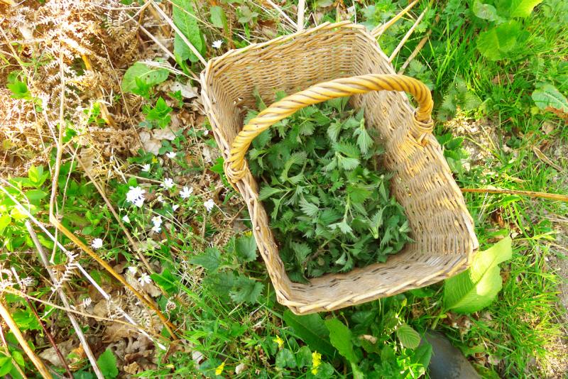 Basket of nettles