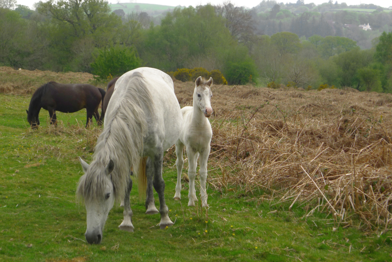 Ponies 2