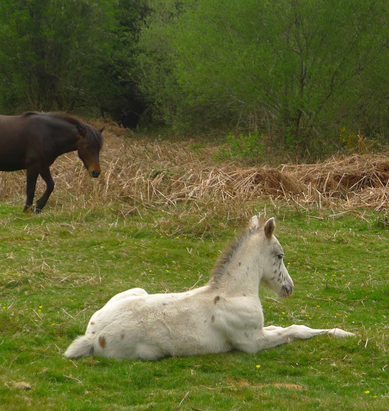 Ponies 13