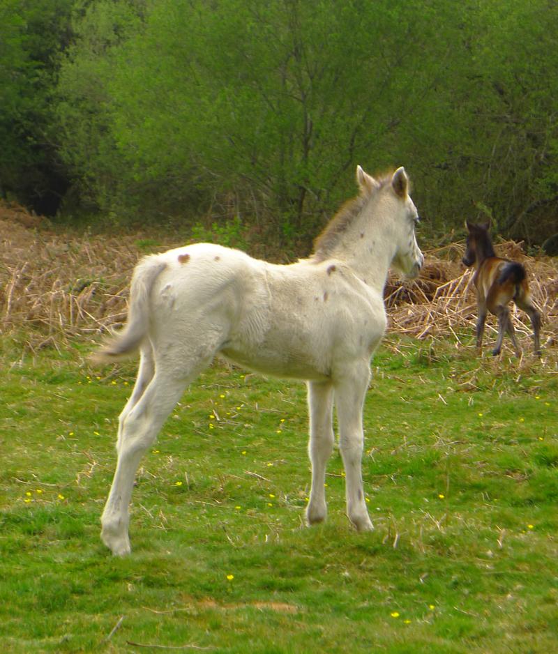 Ponies 14