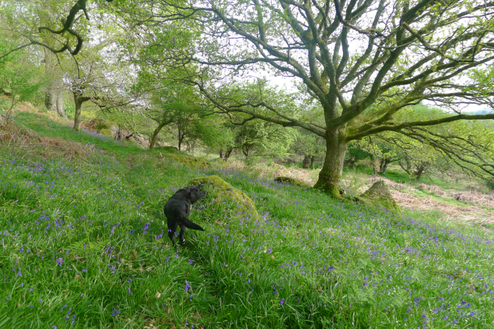 As Tilly and I roved out on a May morning...