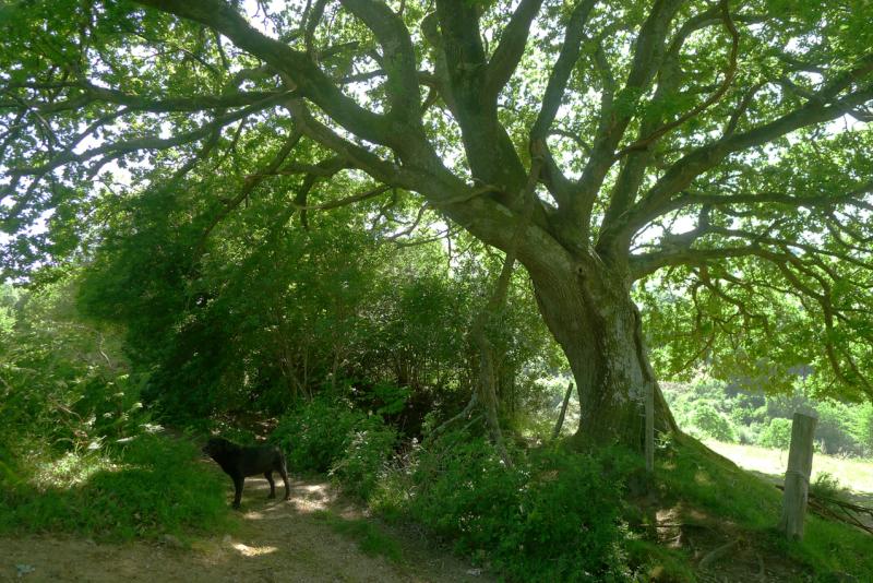 Visiting the oak 2
