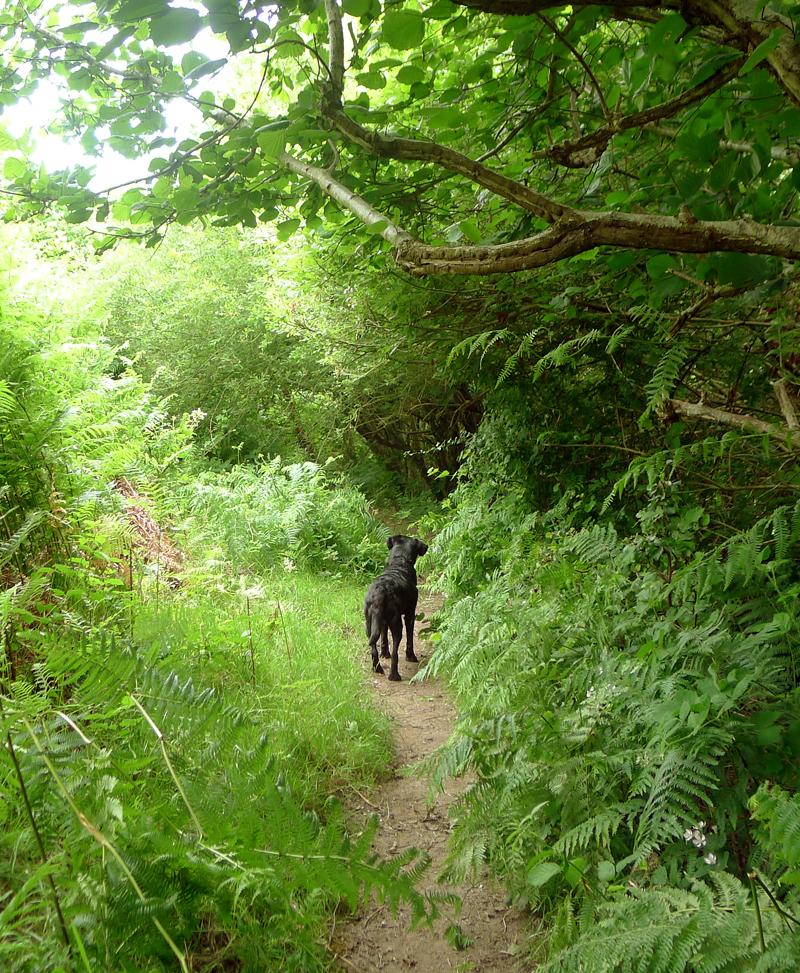 Nattadon path