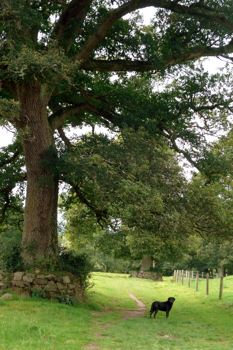 Oak and stone