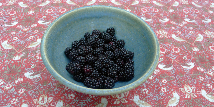 Blackberries picked this morning