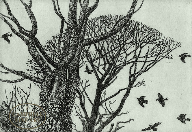 Rookery by Eleanor Huges