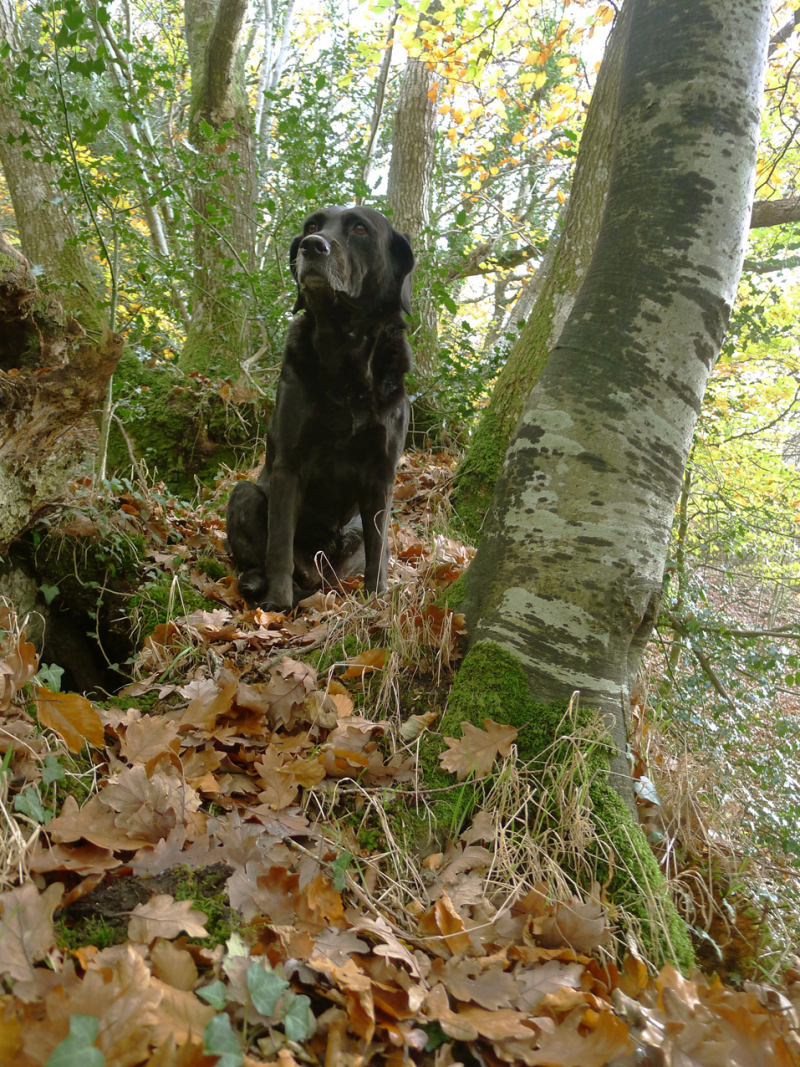 Tilly in the autumn woods