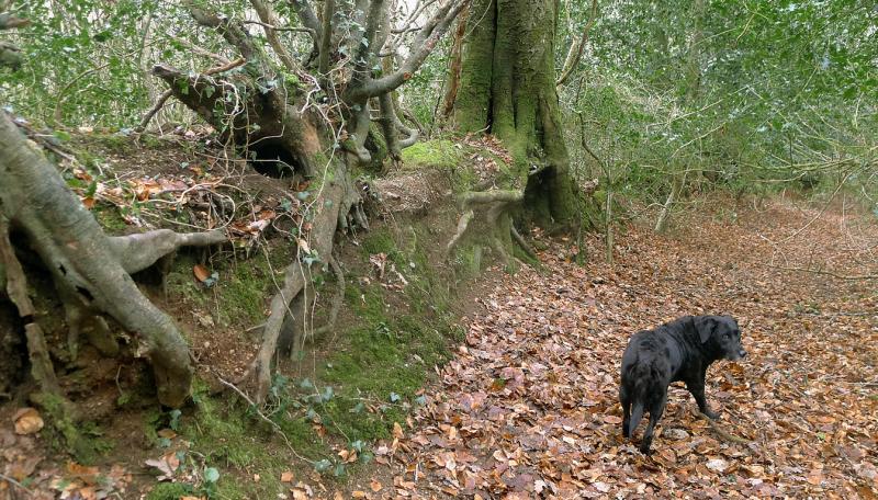 Woodland wall
