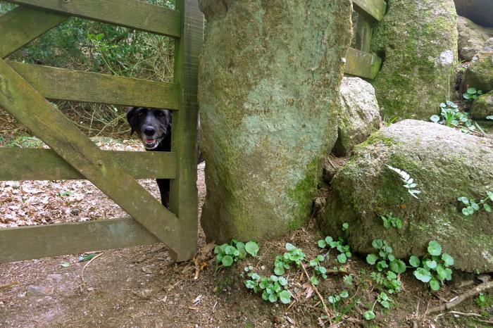 Nattadon Gate
