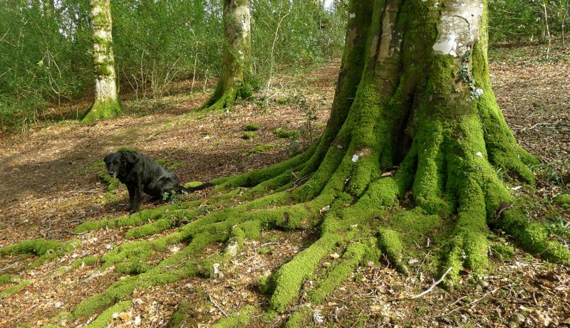 Woods 8