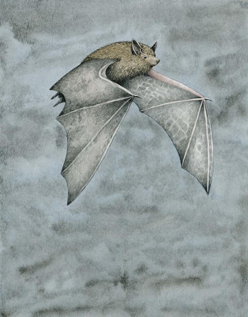 Dwarf Bat by Marieke Nelissen