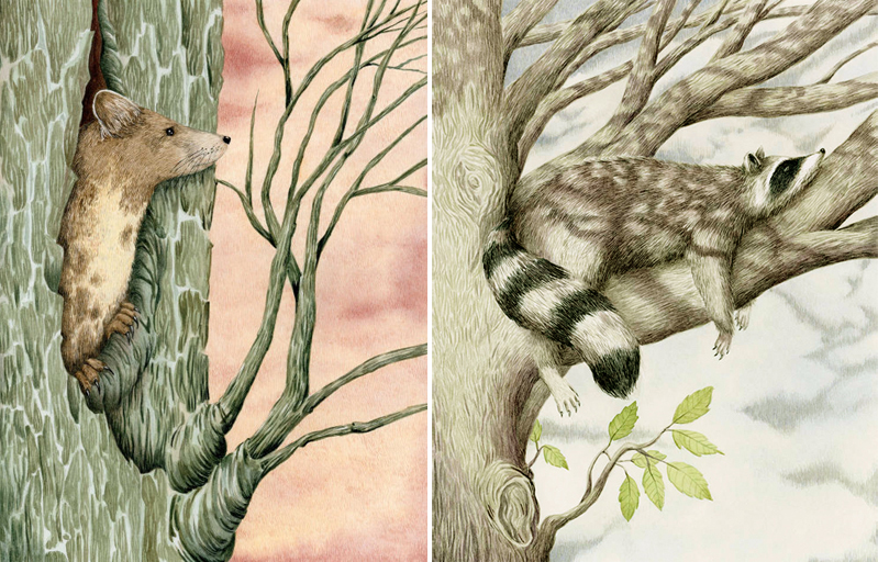 Tree Marten and Raccoon by Marieke Nelissen