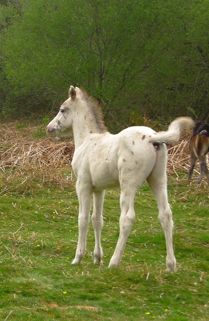 Ponies 17