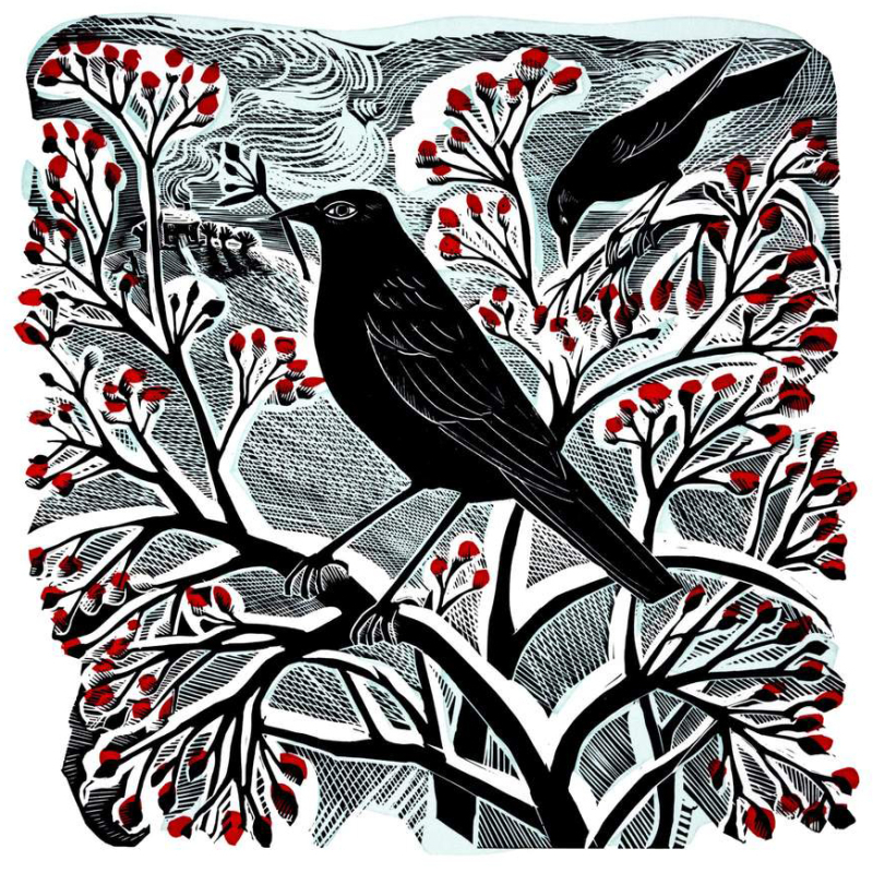 Blackbirds & Berries by Angela Harding