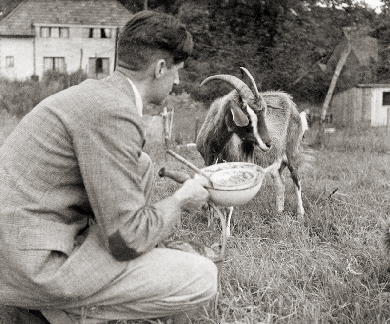 Orwell and goat