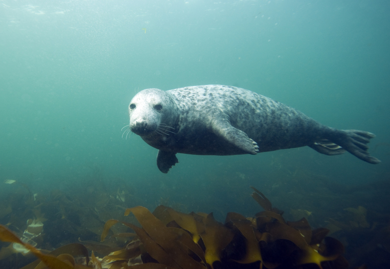 Grey seal, Farne Island, photographed by Dan Kitwood