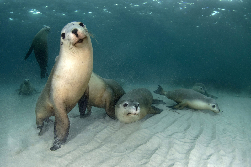 Seal family, Hopkins Isle, photographed by Peter Verhoog