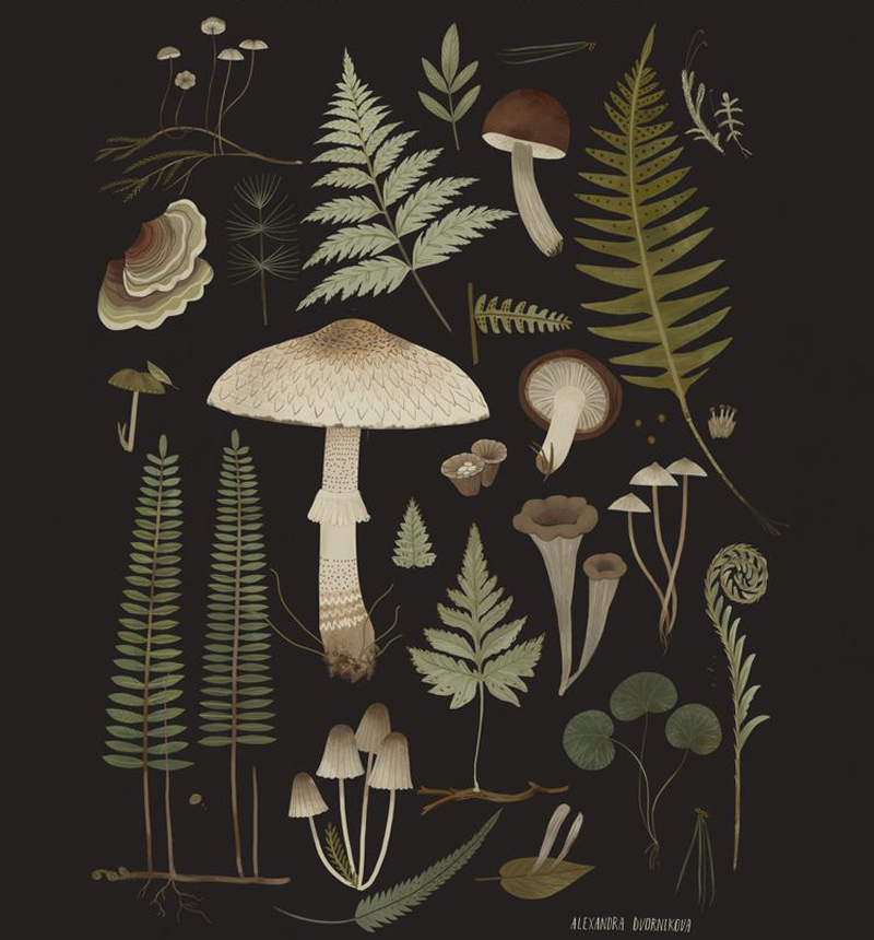 Forest Treasures by Alexandra Dvornikova