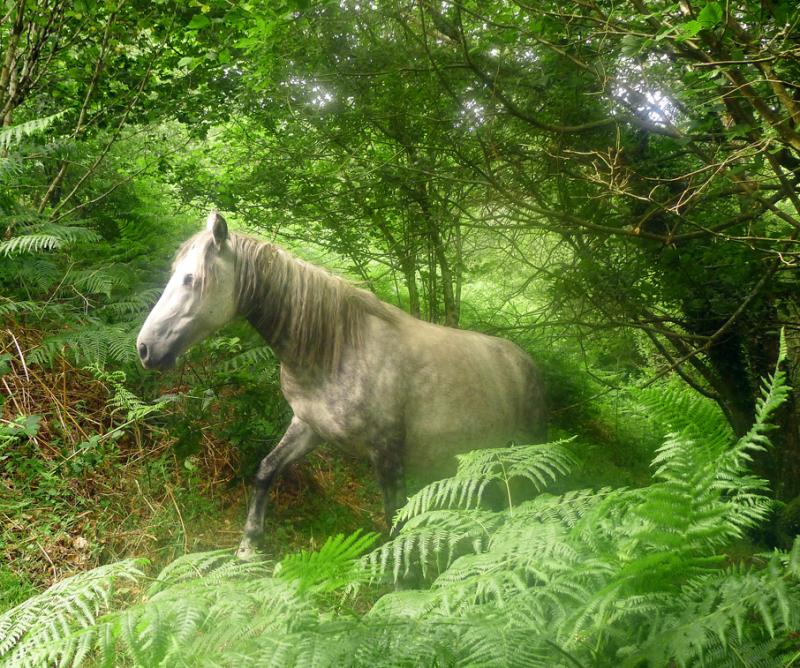 Dream horse going