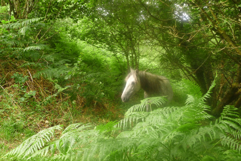 Dream horse coming