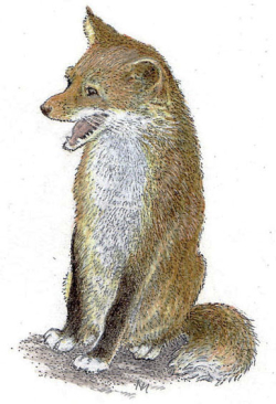Fox by Imga Moore