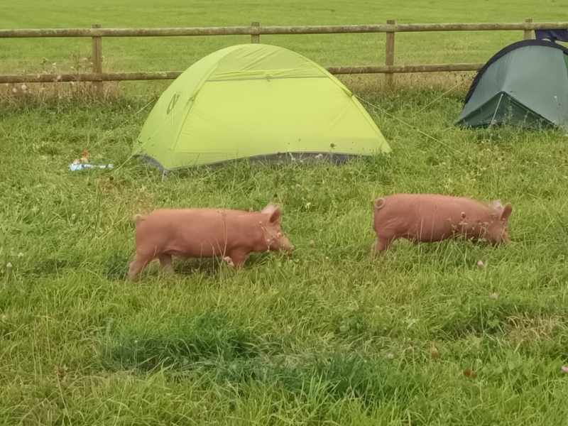 Local residents inspect the Pilgrims' camp in Oxfordshire