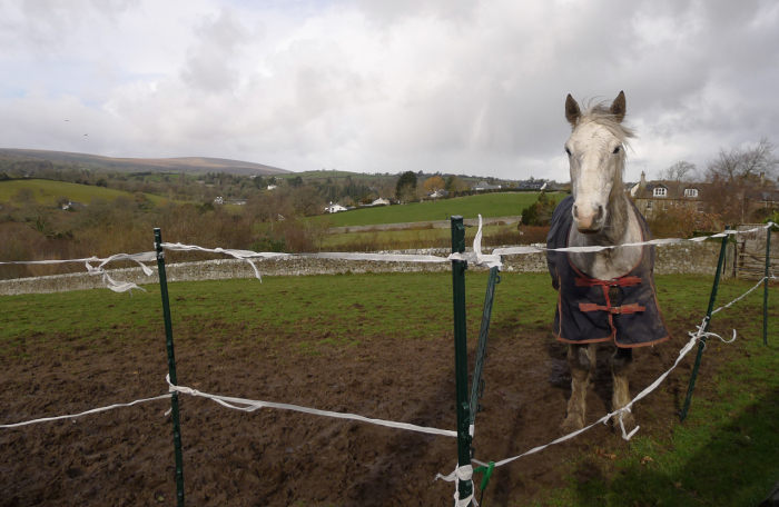 Jenny's horse in his winter pasture