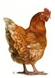 Red Hen by Hennady Sopirin