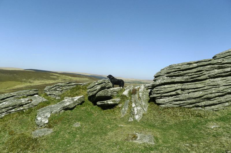 Tilly on Dartmoor