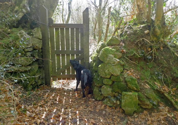 Woodland Gate