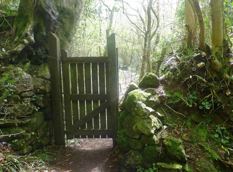 Woodland gate 2