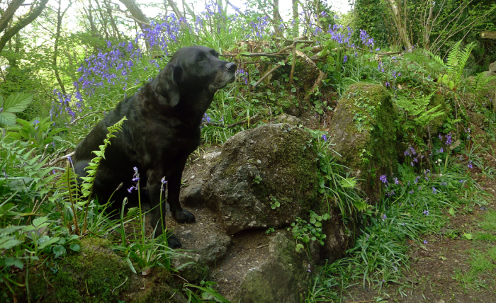 Tilly, moss, and bluebells