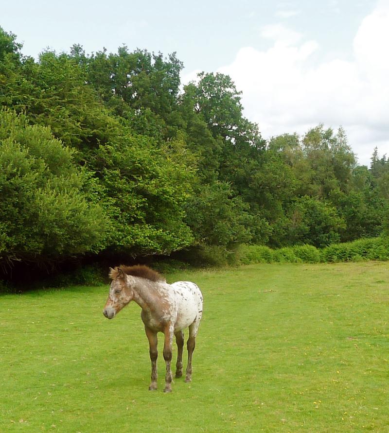 Ponies 10