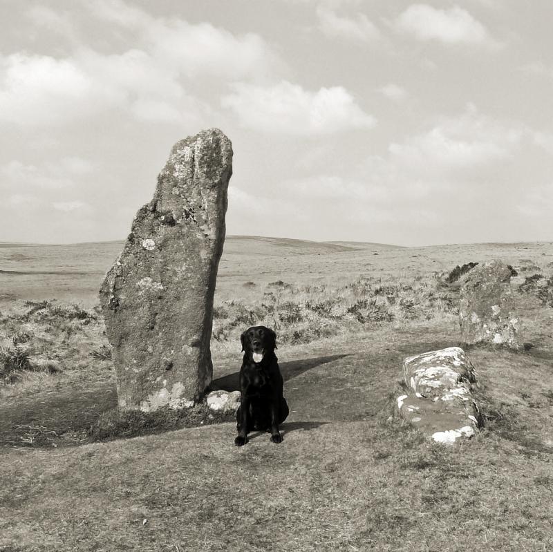 Tilly at Scorhill stone circle