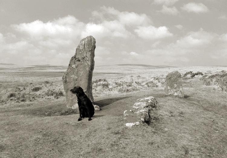 Hound and Stone