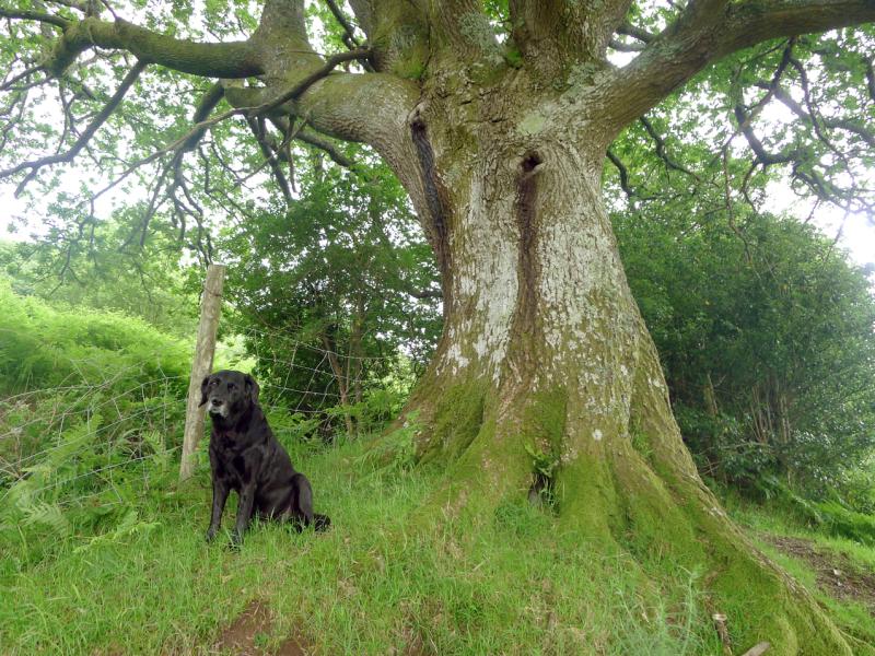 Tilly & Old Oak 3