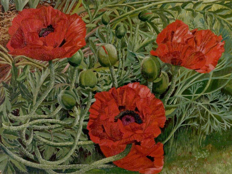 Poppies by Stanley Spencer